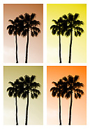 PICTURE PERFECT PALMS