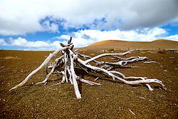 Devastation Trail and Pu`u Pua`i cinder cone, Kilauea, Hawaii Volcanoes National Park, Big Island, Hawaii