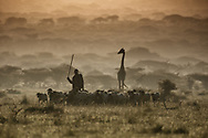 Dreamy confluence of giraffe, goats and a young Maasai boy who share and traverse the wilderness in harmony. Morning fog gracefully envelopes the trees while soft orange light cascades throught this magical landscape in Ol Donyo, Kenya.