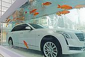 Carps Swim Around Luxury Car In Fish Tank