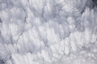 Rime ice. Yellowstone National Park, WY.