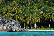 """Coconut palm tree, (Cocos nucifera),Triton Bay, Mainland New Guinea, Western Papua, Indonesian controlled New Guinea, on the Science et Images """"Expedition Papua, in the footsteps of Wallace"""", by Iris Foundation"""
