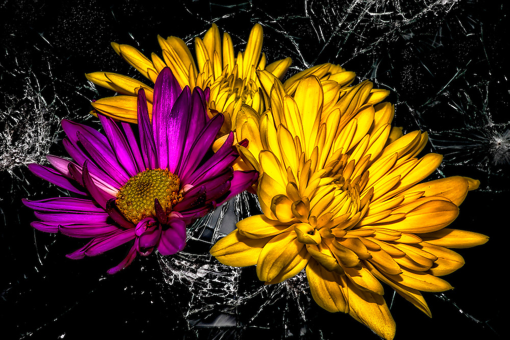 Soft floral petals contrast against the black broken glass. Yellow and Purple Flowers arranged on shattered glass with a novelty flair.