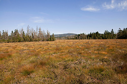View of Goethemoor with Brocken in Harz National Park