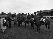 07/08/1980<br /> 08/07/1980<br /> 07 August 1980<br /> R.D.S. Horse Show: John Player Top Score Competition, Ballsbridge, Dublin.
