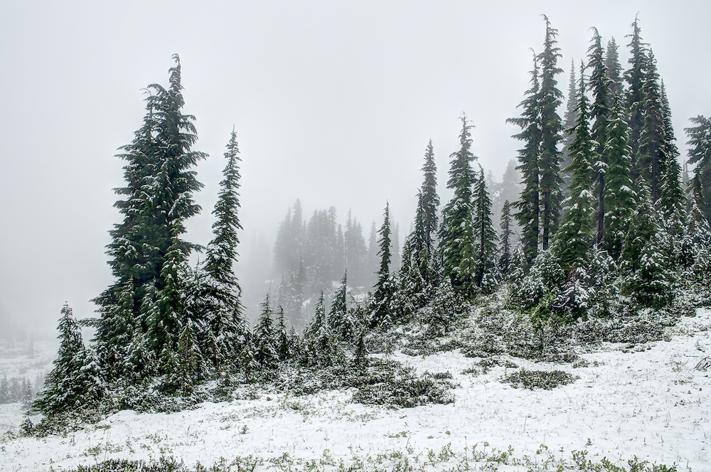Snow-covered subalpine meadows and evergreens on Mount Rainier's southern slope.