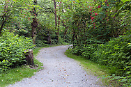 A trail winds through the forest at Derby Reach Regional Park in Langley, British Columbia, Canada.  The red berries on the right are Red Elderberry (Sambucus racemosa).  Many of the other shrubs seen here are Salmonberry (Rubus spectabilis) bushes.