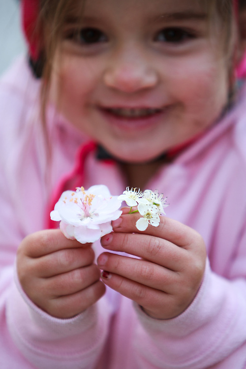 A toddler holds cherry blossoms that she collected while riding her big wheel around the neighborhood.