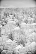 In black and white it is hard to tell the difference between sand and snow. Missoula Photographer, Montana Photographer, Pictures of Missoula, Montana Photos