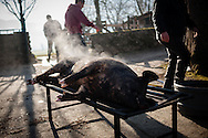 A dead pig being burnt to remove the hair in traditional way pig slaughtering. Legasa (Basque Country). January 7, 2017. The slaughter traditionally takes place in the autumn and early winter and the work often is done in the open. (Gari Garaialde / Bostok Photo)
