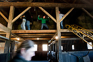 Hay Day at Blackthorn Farm