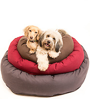 Two cute dogs on a stack of Dog Gone Smart Pet Products' Donut Bed.