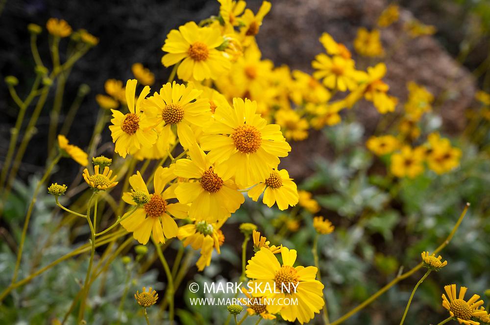 Wind Cave Trail in Usery Mountain Regional Park, Mesa AZ