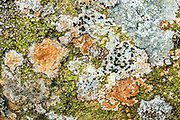 Green, orange and white lichen pattern in Borrowdale valley in Lake District National Park, England, United Kingdom, Europe. England Coast to Coast hike with Wilderness Travel, day 3 of 14: from Wasdale Head to Seathwaite. From Wasdale Head, we climbed to 1637-foot Styhead Pass, then descended via Styhead Tarn to the valley of Borrowdale. Overnight at Keswick Country House, in Cumbria county. [This image, commissioned by Wilderness Travel, is not available to any other agency providing group travel in the UK, but may otherwise be licensable from Tom Dempsey – please inquire at PhotoSeek.com.]
