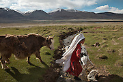 A Kyrgyz woman brings a calf back, while the mother yak follows..Summer camp of Muqur, Er Ali Boi's place...Trekking through the high altitude plateau of the Little Pamir mountains (average 4200 meters) , where the Afghan Kyrgyz community live all year, on the borders of China, Tajikistan and Pakistan.