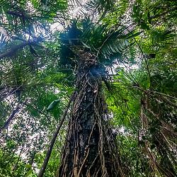 """""""Mata Seca de Restinga (Paisagem) fotografado em Guarapari, Espírito Santo -  Sudeste do Brasil. Bioma Mata Atlântica. Registro feito em 2008.<br /> <br /> <br /> <br /> ENGLISH: Dry Forest of Restinga photographed in Guarapari, Espírito Santo - Southeast of Brazil. Atlantic Forest Biome. Picture made in 2008."""""""