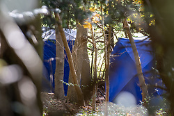 © Licensed to London News Pictures. 25/10/2020. Watlington Hill, UK. Forensic tents in woodland where the dead woman was located. A murder investigation has been launched by Thames Valley Police after the body of a woman in her sixties was located in woodland in the Watlington Hill National Trust Estate at approximately 5:53pm on Friday 23/10/2020. Photo credit: Peter Manning/LNP