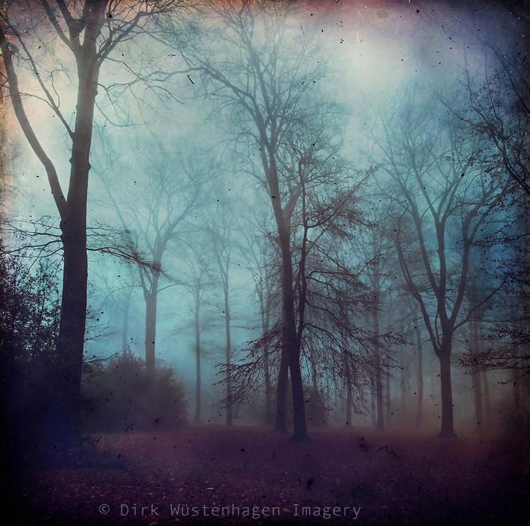Moody misty morning in a forest on a fall day