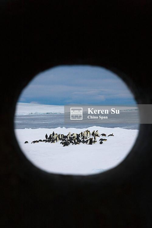 View of Emperor Penguins through hole of ship, Snow Hill Island, Antarctica