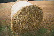Round barley straw bale in cereal field, Shottisham, Suffolk, England