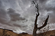 A dried up dead tree with storm clouds in the background in the Ramon Crater, Negev, Israel. Ramon Crater is one of the most spectacular geological features of Israel's Negev Desert, and is the world's largest karst erosion cirque. It is located at the peak of Mount Negev, some 85 kilometers south of the city of Beer-Sheva. The Ramon Crater is 40 kilometers long and 2 to 10 kilometers wide, shaped like an elongated heart.