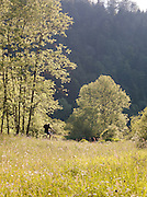 A cyclist in the countryside at La Cluse-et-Mijoux, Jura region, France