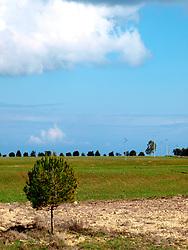 Alberi nelle campagne di Carpignano