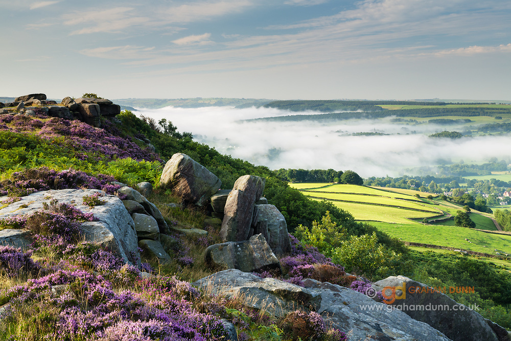 A colourful August morning on Baslow Edge, with flowering heather and mist in the Derwent Valley. A summer temperature inversion in the Derbyshire Peak District, England, UK.
