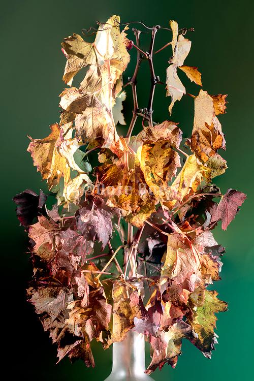 autumn season leaf composition