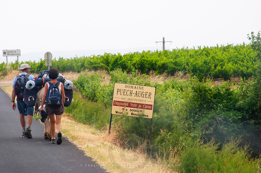 Hikers with backpacks rucksacks walking on the road side. Domaine Puech-Auger AOC Montpeyroux. Montpeyroux. Languedoc. France. Europe. Vineyard.