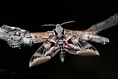 Insect Decline in Arizona