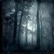 Deciduous forest on a misty autumn morning - textured photography