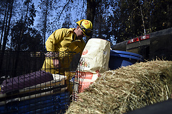 November 18, 2018 - Magalia, California, USA - Magalia, California, U.S. - Justin Archer, a volunteer with North Valley Animal Disaster Group, was on one of a dozen or more animal rescue teams checking up on animals at the Camp Fire. Archer has been working on the fire off-an-on since day one of the blaze. This Sunday he and his partner Andrew Gooderham, a retired Chico Fire and Rescue firefighter, had over 28 homes to check up on. They were told to bring all animals to the shelter since rain is expected this week and it would make it difficult to continue taking care of animals that were left in the home. (Credit Image: © Neal Waters/ZUMA Wire)