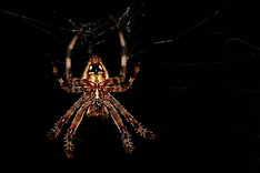 Spiders Royalty Free Stock Images
