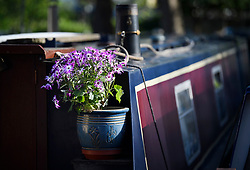 © Licensed to London News Pictures. 04/05/2019. London, UK. Flowers sit on a boat at the Canalway Cavalcade festival in Little Venice, West London on Saturday, May 4th 2019. Inland Waterways Association's annual gathering of canal boats brings around 130 decorated boats together in Little Venice's canals on May bank holiday weekend. Photo credit: Ben Cawthra/LNP