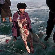 Mongolia. the Hovsgol lake is frozen in winter; a wolf kiled by the nomads   -  / le lac Huvsgul, gele en hiver; un loup tue par les nomade  HOVSGOL PROVINCE - Mongolie / L0009110B