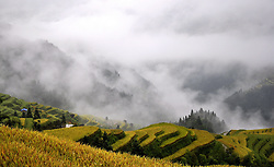 September 14, 2016 - China - Guizhou, CHINA-September 13 2016:?(EDITORIAL?USE?ONLY.?CHINA?OUT) Fog shrouds the terrace fields after a rain in Congjiang County, southwest China¡¯s Guizhou Province. The village of Miao ethnic minority group lies in the misty mountain, which looks like a peaceful fairyland. (Credit Image: © SIPA Asia via ZUMA Wire)