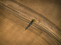 Aerial view of lonely tree on the side of an empty road in the middle of farmland in sunset light in Estonia.