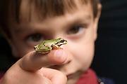 Three year old Ian Wilhelm with a pacific treefrog (Pseudacris regilla). Full released. #21205Ian