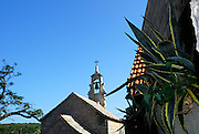 Agave plant, with small church and belltower in background. Village of Vrboska, island of Hvar, Croatia