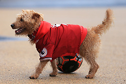 10th December 2017 - Premier League - Liverpool v Everton - A dog wearing a replica Liverpool shirt plays with a football outside the ground - Photo: Simon Stacpoole / Offside.
