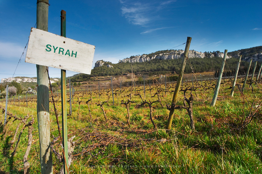 Sun bleached sign in the vineyard saying Syrah Château Barbanau and Clos Val-Bruyere Cassis Cote d'Azur Var France