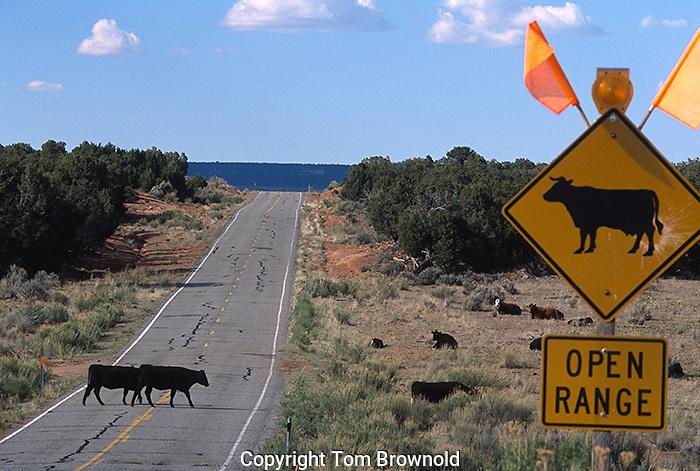 Open range for cattle grazing on BLM lands