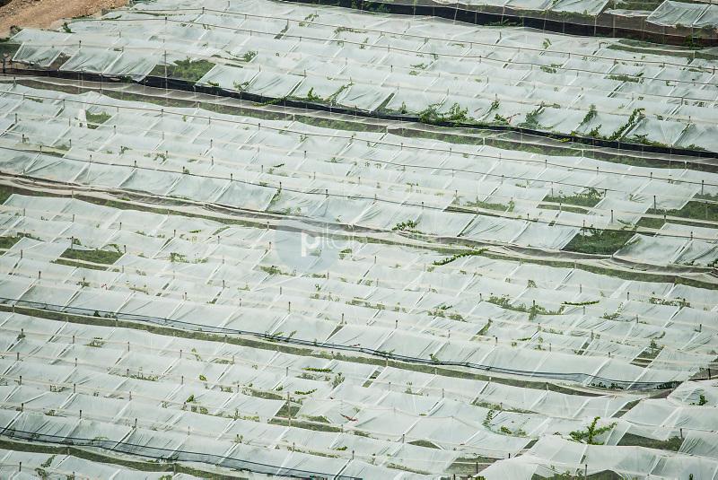 Invernaderos. Totana. Murcia. ©Antonio Real Hurtado / PILAR REVILLA