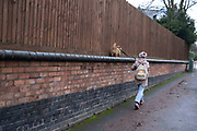 Woman walking her dog on a wall high above the pavement in Moseley on 10th December 2020 in Birmingham, United Kingdom.