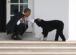 US President Barack Obama crouches to greet his dog, Bo, outside the Oval Office of the White House, in Washington, DC, USA on March 15, 2012. Photo by Martin H. Simon/Pool/ABACAPRESS.COM  | 313285_001 Washington Etats-Unis United States
