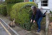 A cat owner attempts to gather her pet outside her south London home, on 6th March 2019, in London, England.