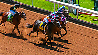 Horse racing, Keeneland Racecourse, Lexington, Kentucky USA.