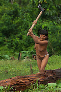 Huaorani Indian woman - Dabe Baiwa chopping fire wood. Gabaro Community. Yasuni National Park.<br /> Amazon rainforest, ECUADOR.  South America<br /> She has the typical stretched ear lobes common amoung the Huaorani. They often wear balsa ear plugs.<br /> This Indian tribe were basically uncontacted until 1956 when missionaries from the Summer Institute of Linguistics made contact with them. However there are still some groups from the tribe that remain uncontacted.  They are known as the Tagaeri. Traditionally these Indians were very hostile and killed many people who tried to enter into their territory. Their territory is in the Yasuni National Park which is now also being exploited for oil.