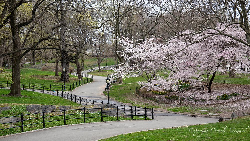 Central Park, April 2, 2020.